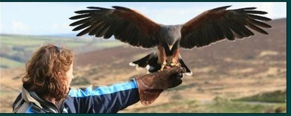 North Devon Hawk Walks