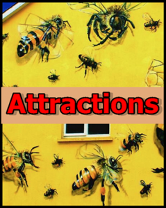 Attractions for front page of website
