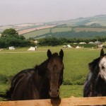 Horses at Halse Farm