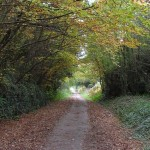 Tarka Trail leafy lane