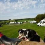 Dogs at Halse Farm